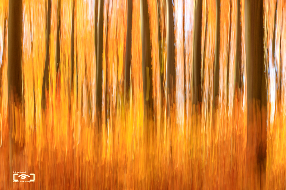 Forest in flames