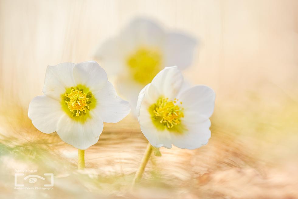 Flower power in Winter