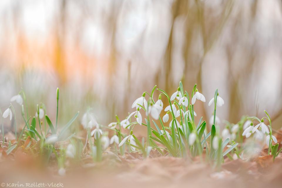 Spring in the Danube wetlands