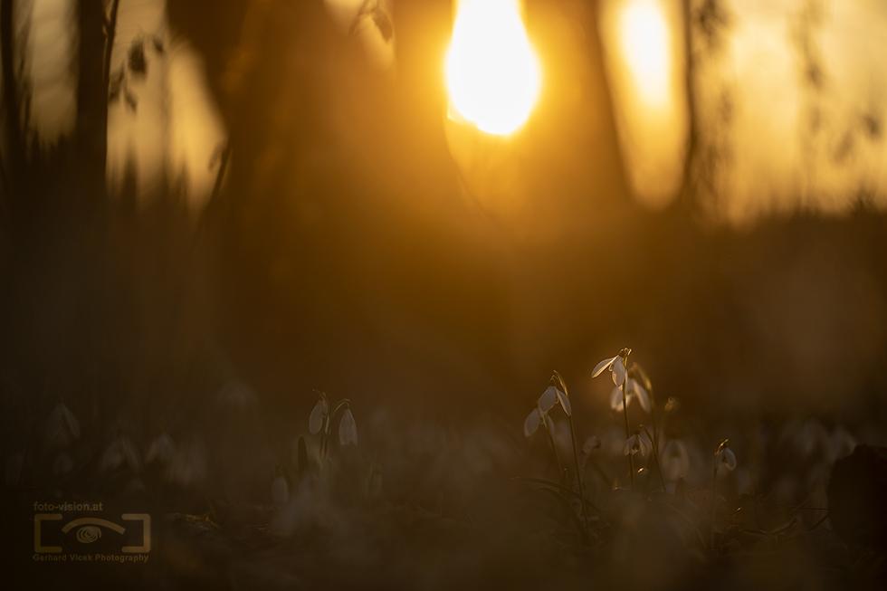 Light spot in spring