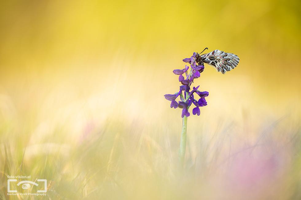Spring colors in wet lands