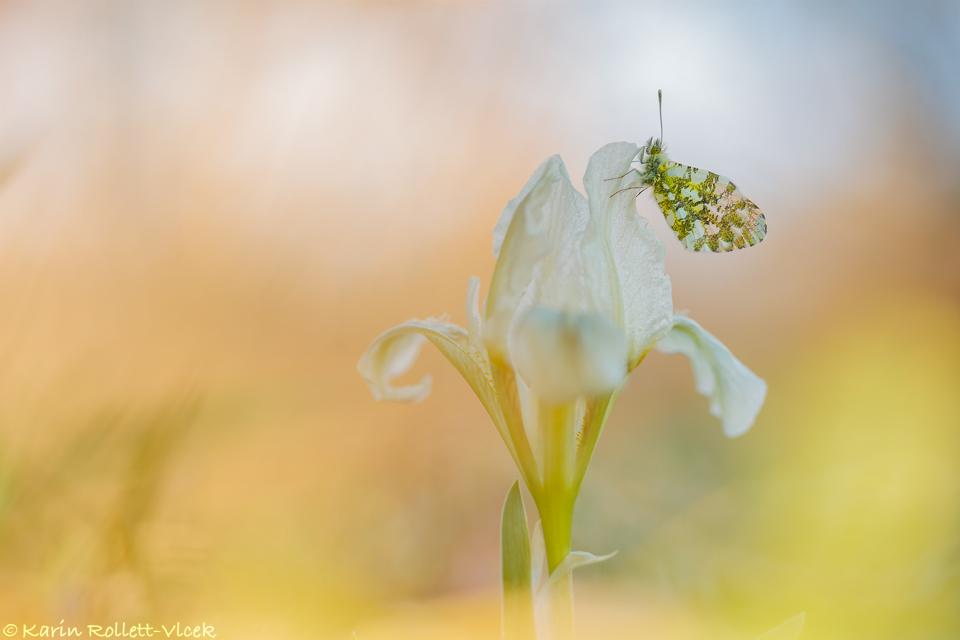 days of springtime