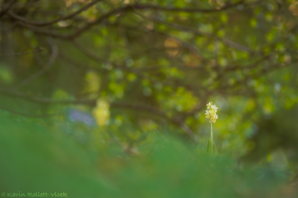 forest orchid