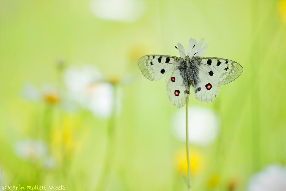 wide open wings