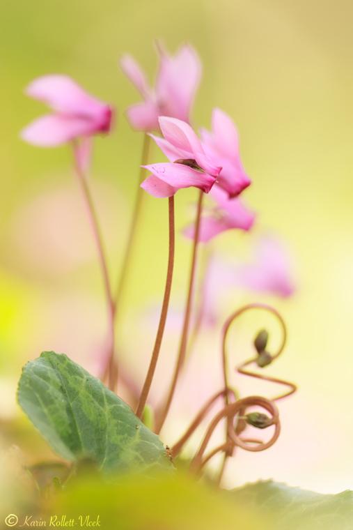 Natural Ikebana
