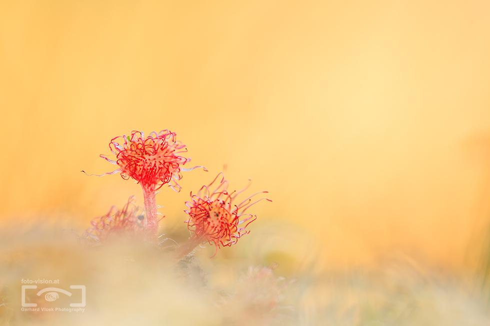 Little autumn blossoms