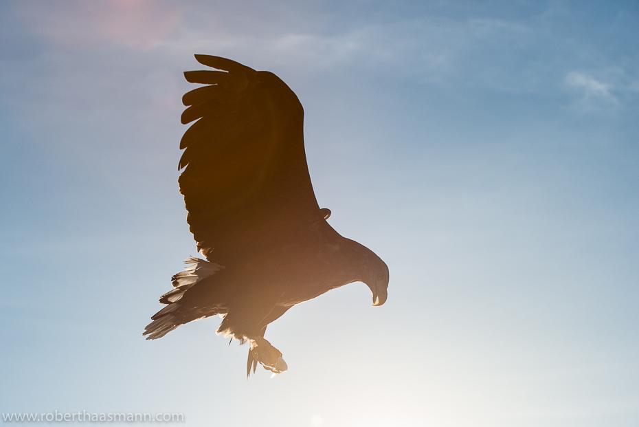 Bright eagle