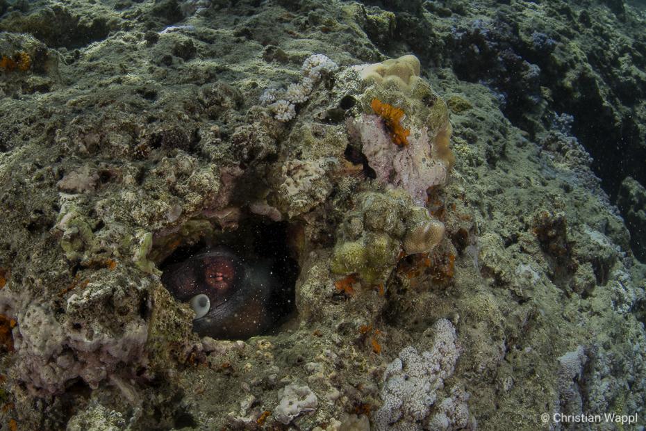 Hidey-Hole
