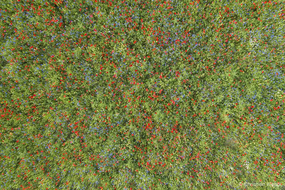 Meadow Watercolours