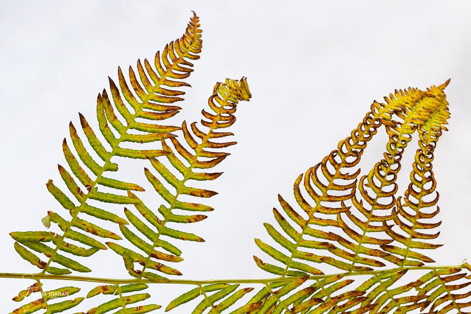 Colourful fern