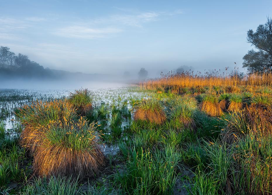 Wasserpflanzen in den Donauauen