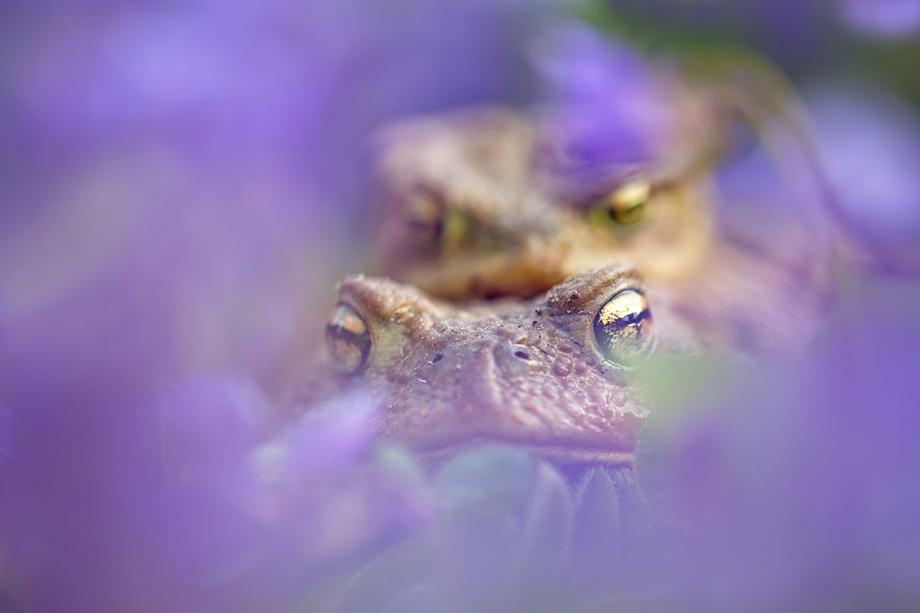 Violet Wedding