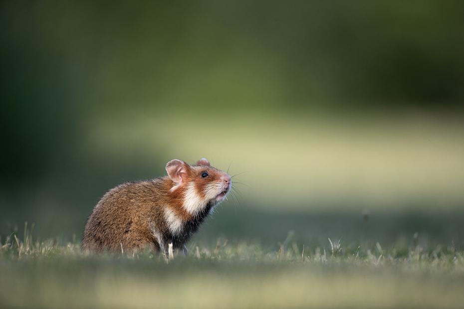 Hamster's Paradise