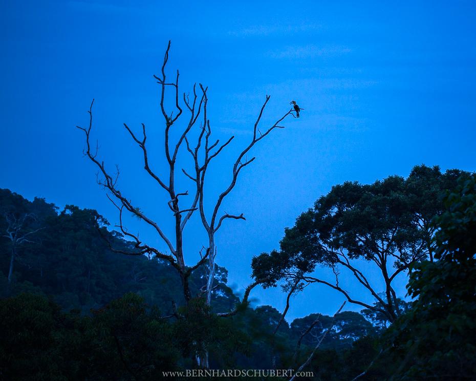 Roosting Tree