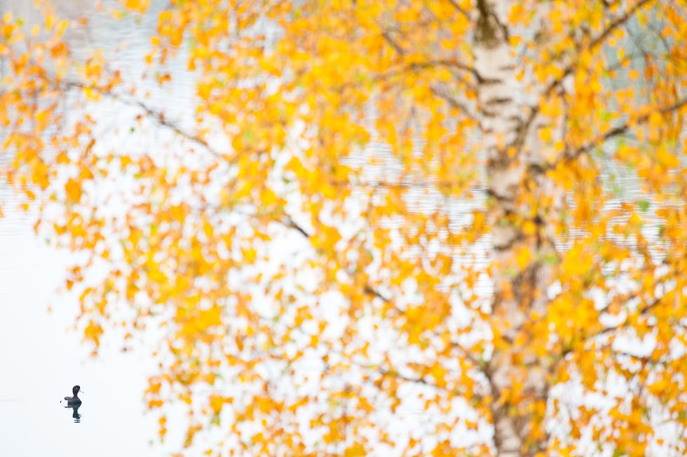 Autumn Beat