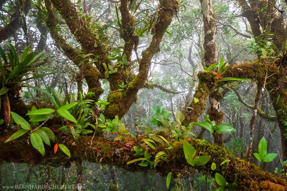 Biodiversity Hotspot