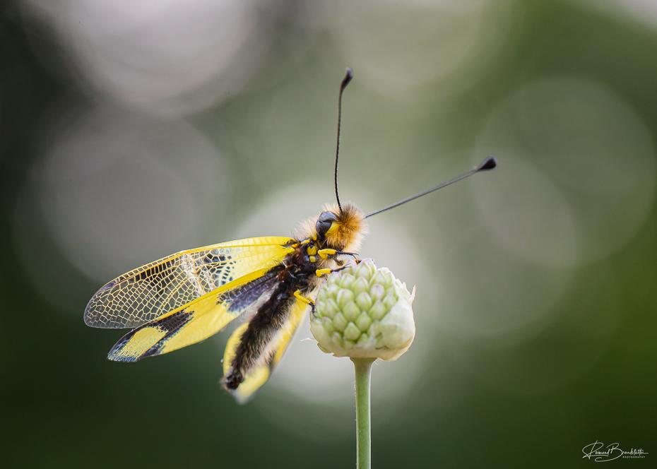 Looks like a Butterfly