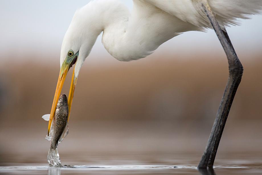 Closeup Catch