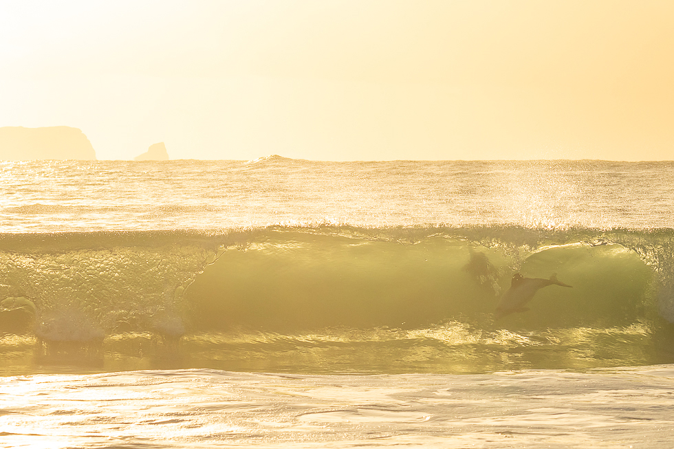 Swell of Gold