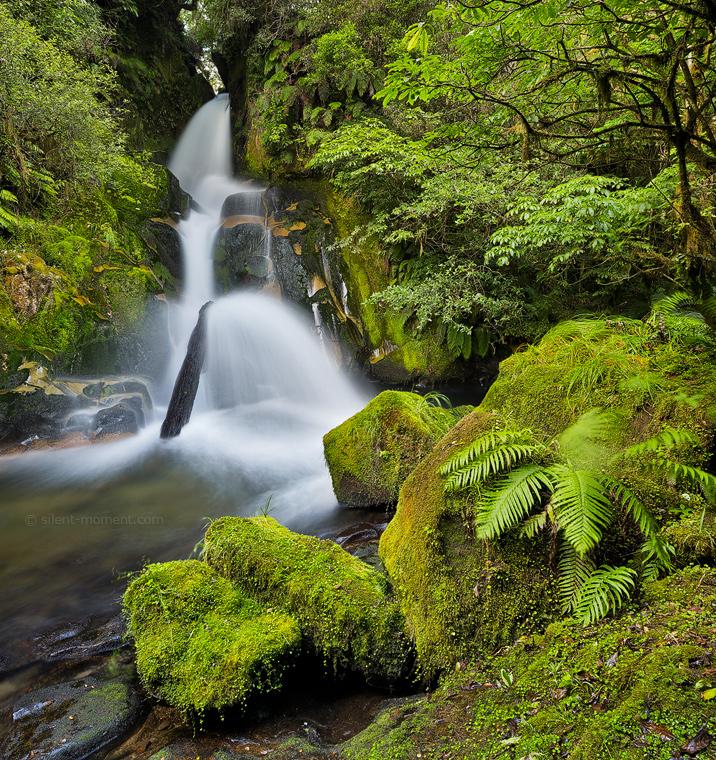 Urewera Waterfall